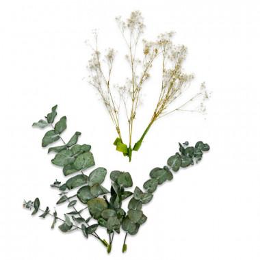 Zestaw dekoracyjny z suszonych kwiatów - Eukaliptus i gipsówka